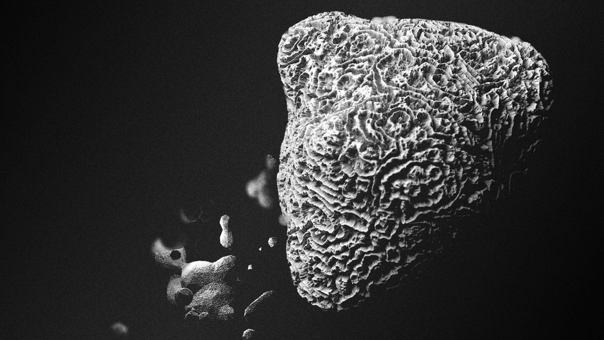 Coral_v5